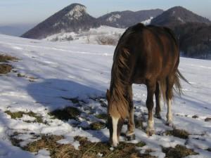 berge jura hofbergli